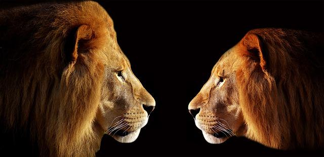 lion-3057316_640