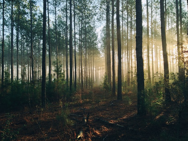 forest-690075_640
