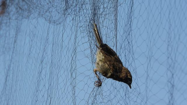 ornithology-3603295_640
